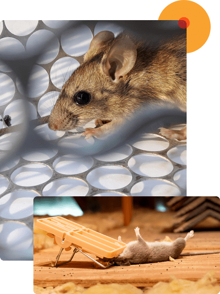 We Offer Effective Rats Removal Service