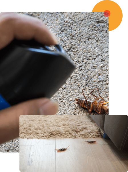 We Offer Exceptional Cockroach Control Service