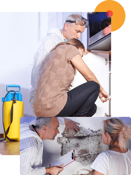 We offer Detailed Termite Inspection in Your Property