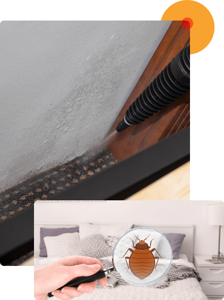 We Offer Effective Bed Bugs Treatment