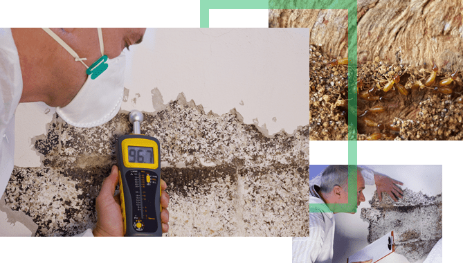 Allow Our Termite Specialists To Conduct A Detailed Inspection Of Your Property